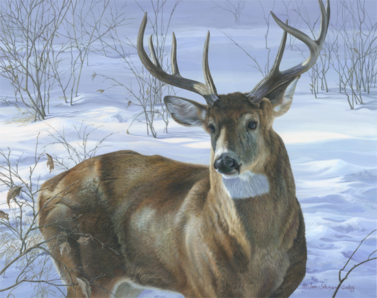 0037-whitetail-buck-adjusted-copy.jpg