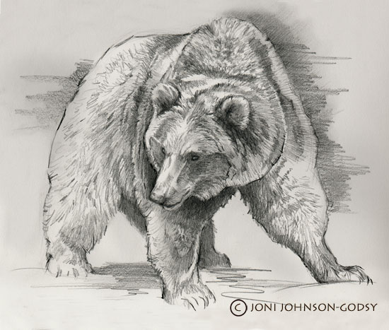yukon-grizzly-sketch-copy
