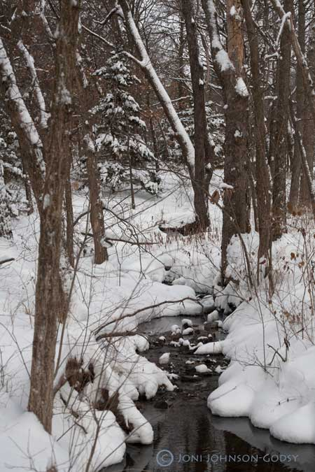 winter-woods-and-creek