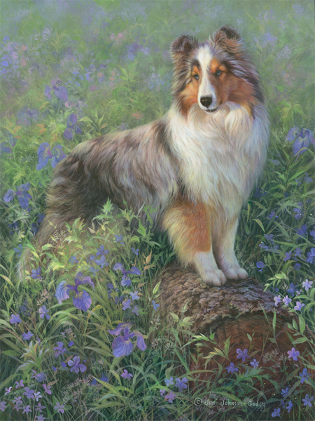 0080-queen-tuts-sheltie-portrait-adjusted