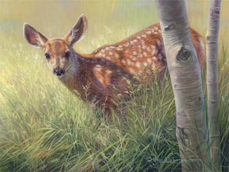 0077-baby-face-mule-deer-fawn-adjusted