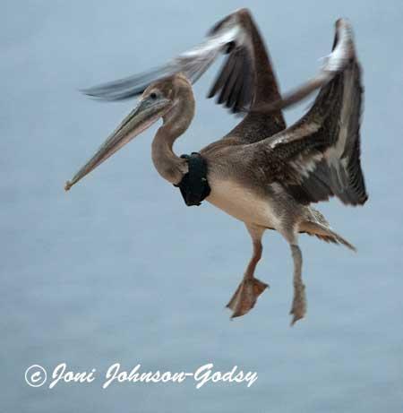 birding-dd