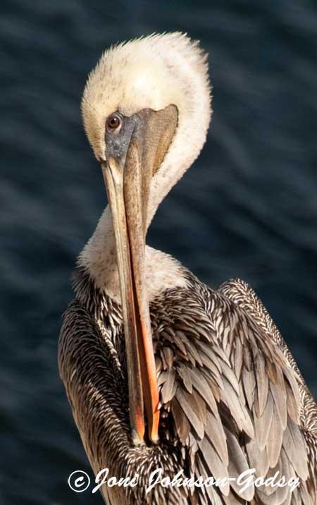 birding-ff