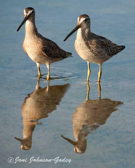 birding-mm