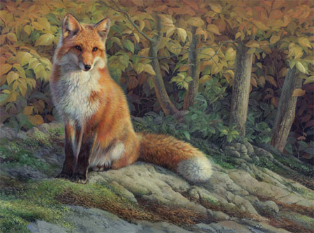 0092-the-edge-of-autumn-red-fox-adj-smaller1